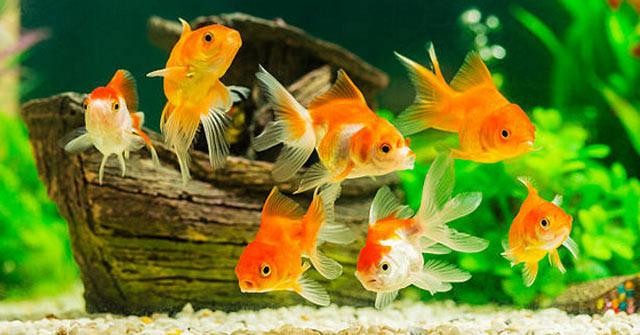Có ý nghĩa gì khi mơ thấy cá? Giải mã giấc mơ thấy cá thường gặp
