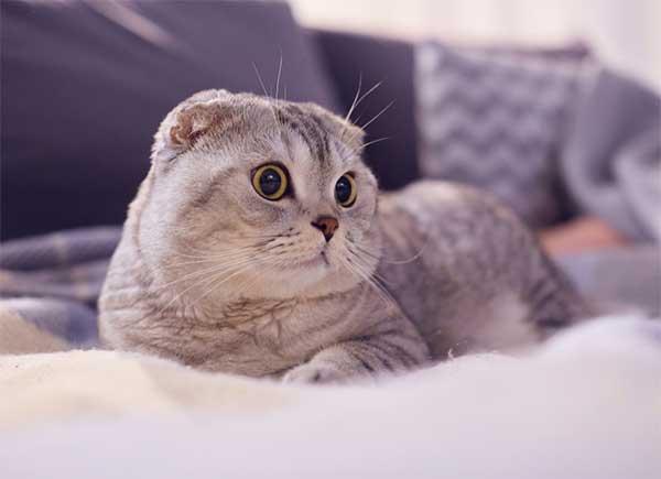 Mơ thấy con mèo là điềm báo may mắn hay đen đủi?