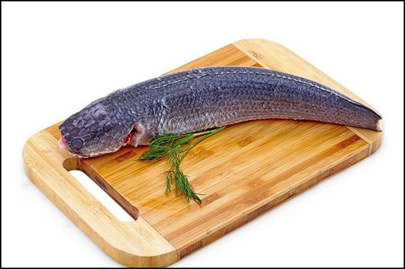 Nằm mơ thấy cá lóc là tốt hay xấu, đánh số mấy để vào bờ?