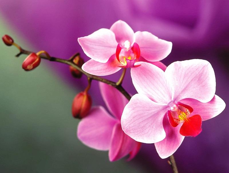 Nằm mơ thấy hoa có điềm báo gì, đánh con số may mắn nào?